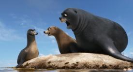 alla-ricerca-di-dory-leoni-di-mare