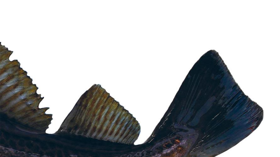 """Il Taccuino Ufficio Stampa Presenta  Merluz Vogn di Giorgio Genetelli Lo scrittore ticinese Giorgio Genetelli presenta """"Merluz Vogn"""", il racconto di un'estate speciale e sognante, perché vissuta dal protagonista […]"""