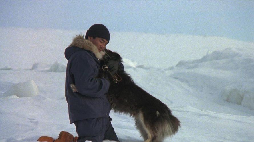 Il cane, il miglior amico dell'uomo, un dato di fatto che il cinema ha sempre cercato di ricordarci tramite uno stuolo di titoli commoventi e indimenticabili, tutti gestiti affinché l'animo […]